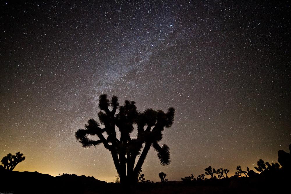The Milky Way - Joshua Tree NP
