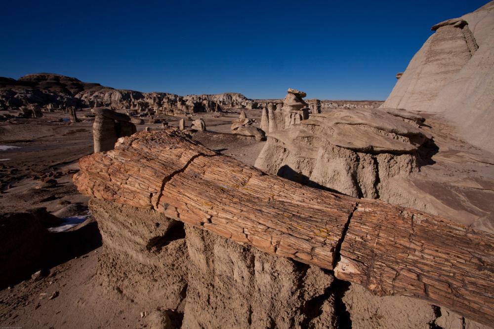 Petrified Tree - Bisti Badlands