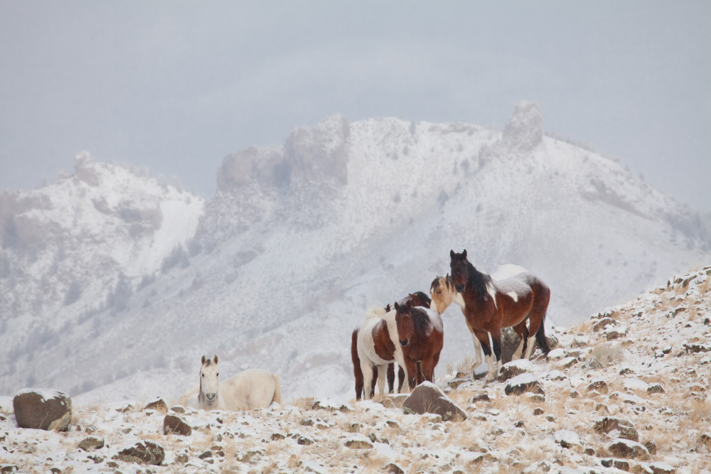 South Fork Horses