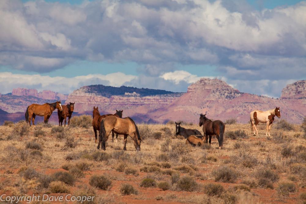 Wild horses on the Tonto Plateau, Arizona