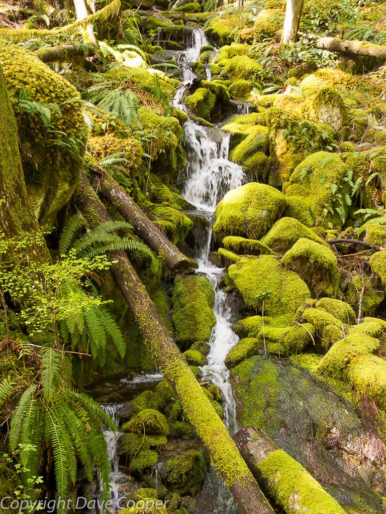 Ladder Creek, Newhalem, North Cascades