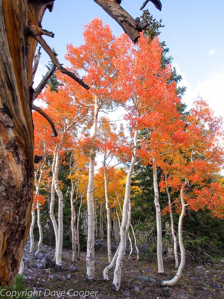 Fall Color, Great Basin National Park, Nevada