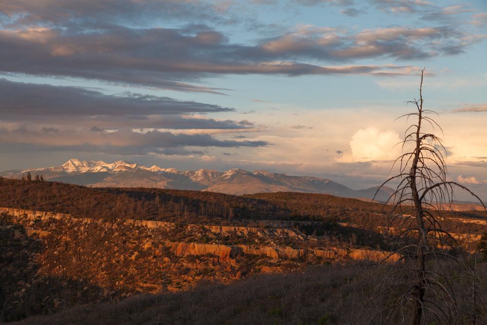 La Plata Range from Mesa Verde Mountains and desert sunset dead tree