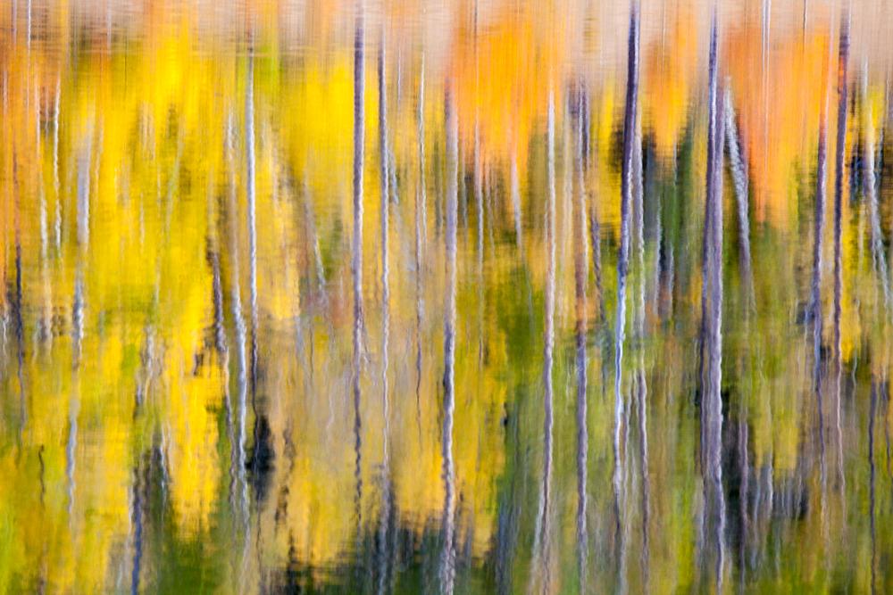 Aspen Reflections, near Craig Colorado abstract